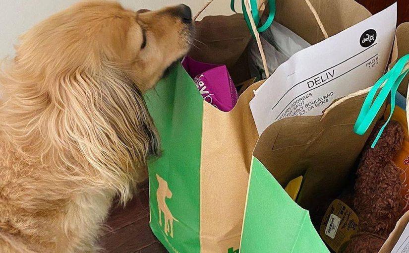 DOG LOVER Street Sign pooch bone animal pet canine Indoor//Outdoor