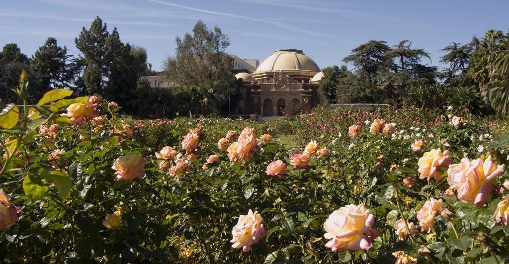 Exposition Park Rose Garden near Circa apartments in downtown Los Angeles