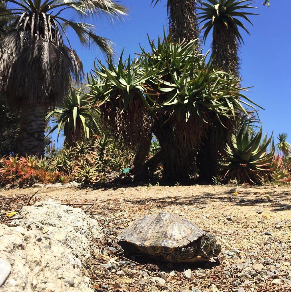Mildred E. Mathias Botanical Garden near Circa apartments in downtown Los Angeles